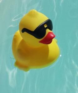 Duck_crop