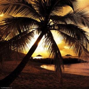 Life's A Beach 512